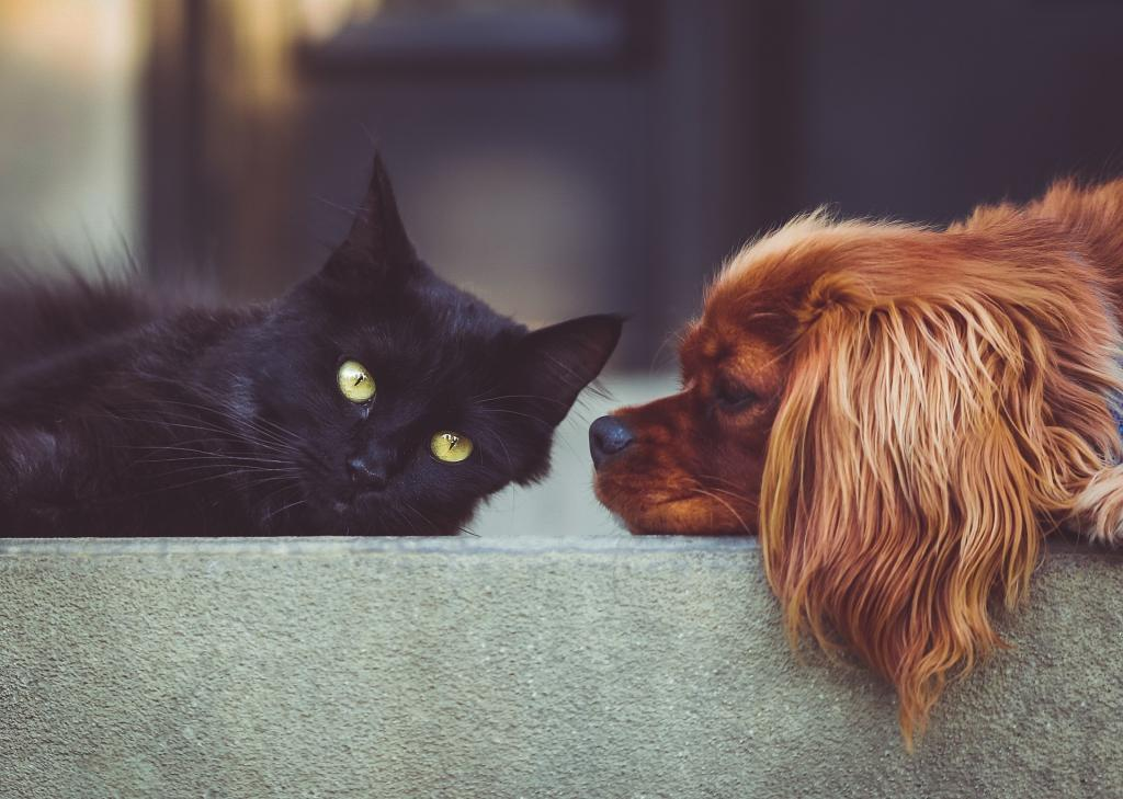 Dog and cat together to represent a god eating out of a litter box