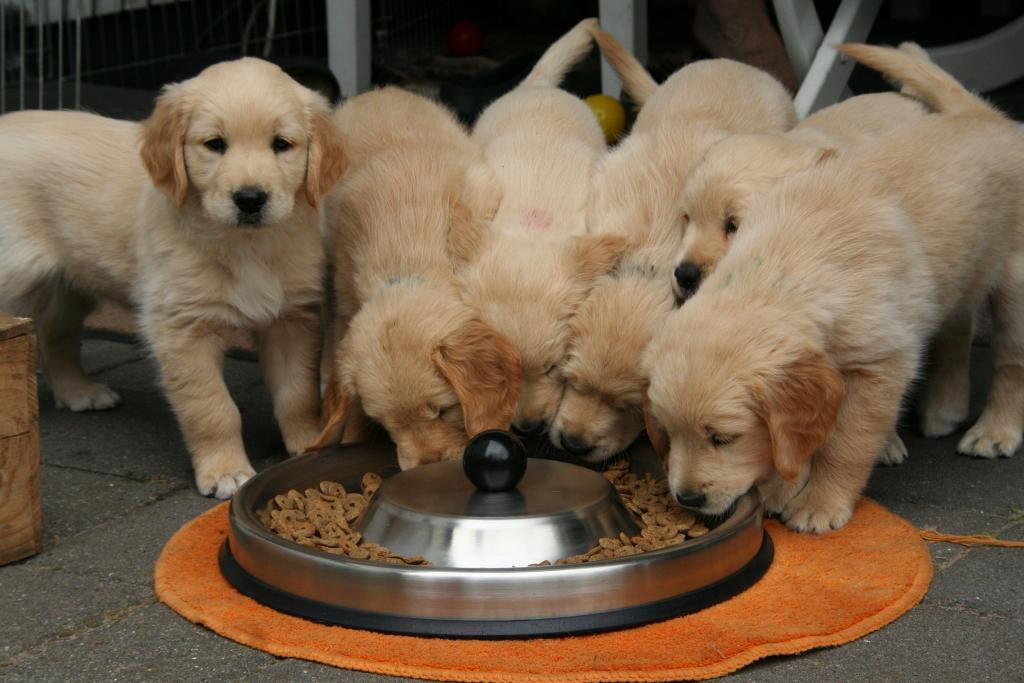 a litter of puppies eating from a large bowl