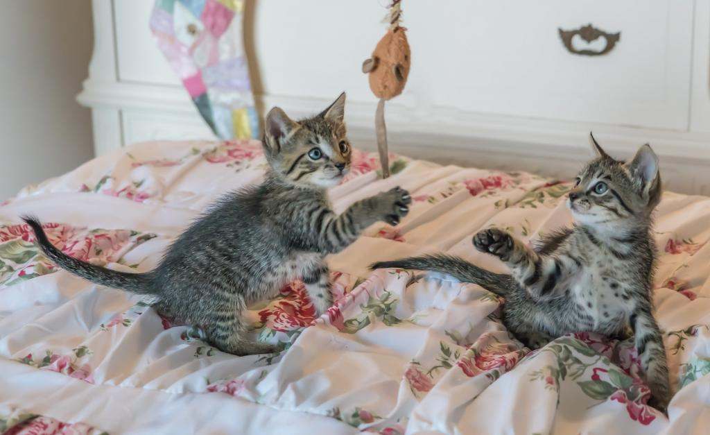 Kittens playing in a room when the door should be closed