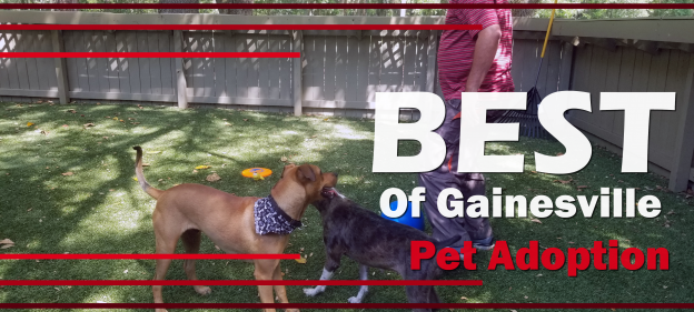 Learn the top places in Gainesville to adopt a cat or dog